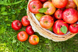 Apple Picking in October (Poem Picture)