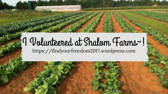 Minah Volunteered at Shalom Farms